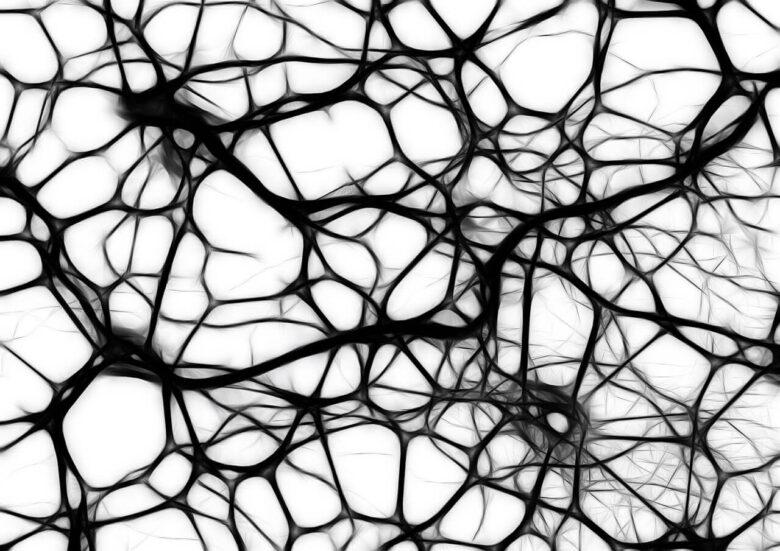 女性脳と男性脳なんてない?でも、男女で記憶力が高いジャンルは違う。