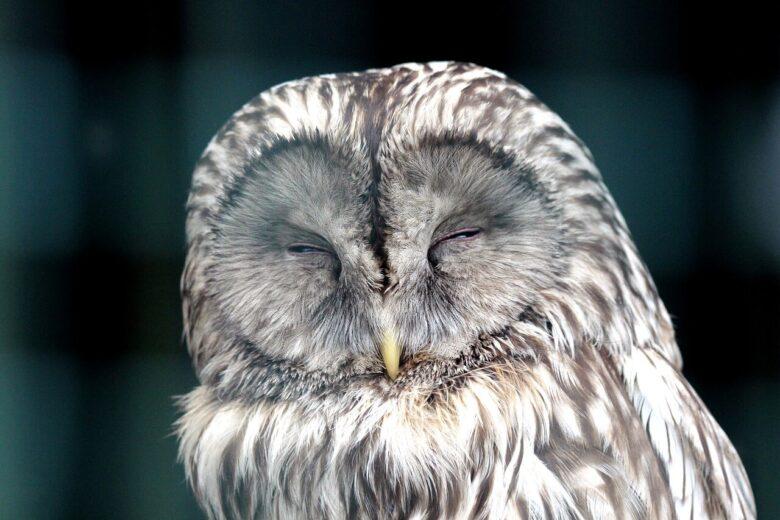 疑心暗鬼になるのは睡眠不足と関係がある?人を信じるにはまず寝よう。