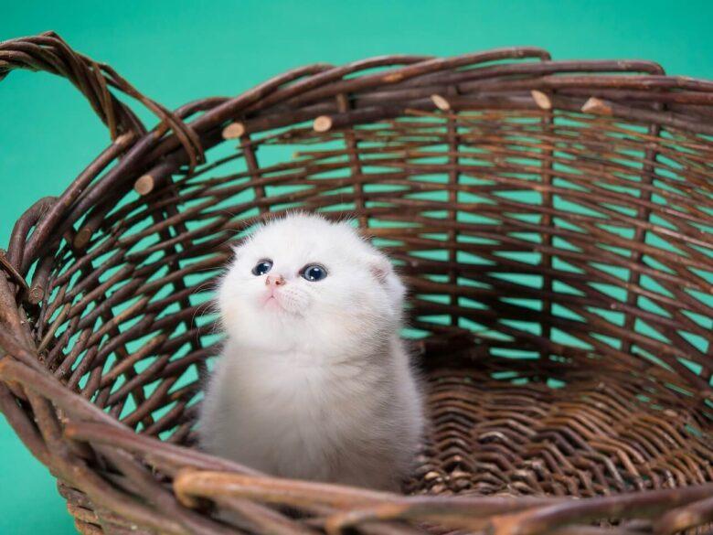 ハローキティは猫でなくその正体は「人」。だから猫を飼っている。