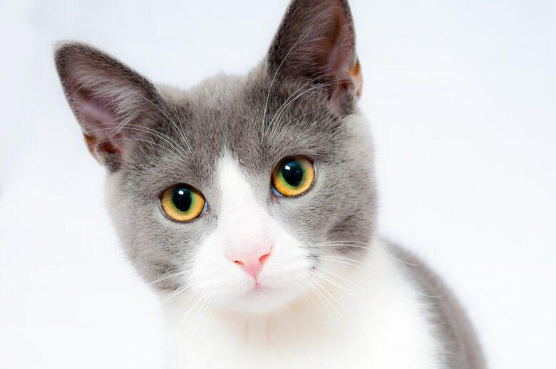 『あつまれどうぶつの森島創造記第39話』夢番地公開と二匹目の猫。