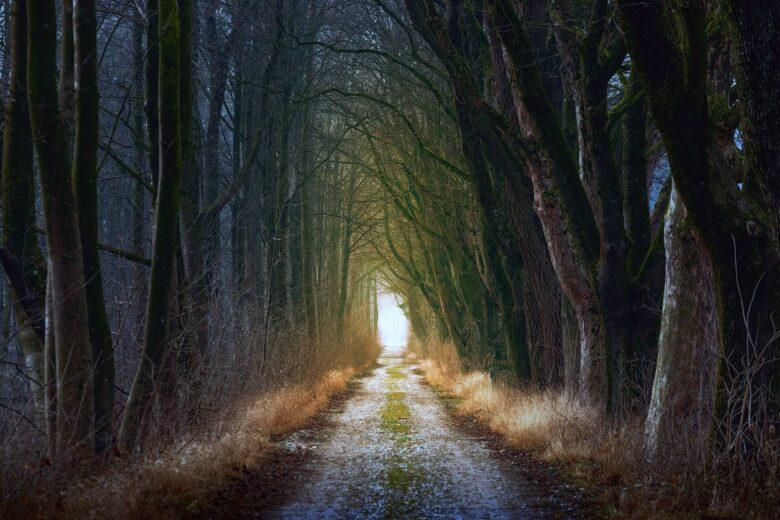 あつまれどうぶつの森の遊び方を色々考えてみた。「飽きた、マンネリ脱出」