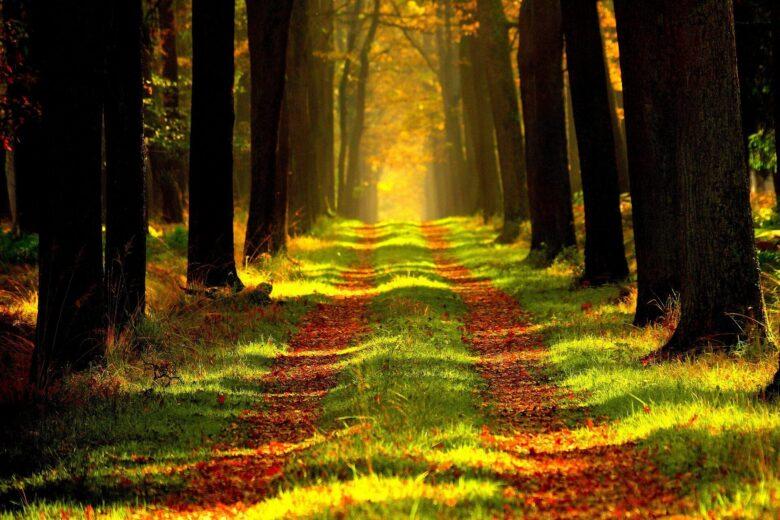 いまさら「あつまれどうぶつの森」をプレイした感想と心理変化をまとめてみる