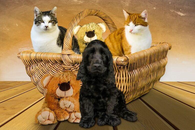 犬派と猫派の人では性格が違う。多分モテるのは犬派の人達