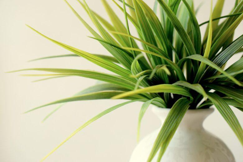 観葉植物を枯らしてしまう人は光触媒加工された人工観葉植物(フェイクグリーン)を飾ってみるといいと思う